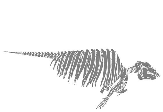 skeleterevu1